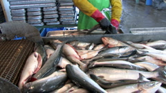 Fish, factory, Stock Footage