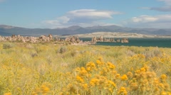 Brush blows in the foreground of this shot of Mono lake, California. Stock Footage