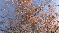Mellow autumn, leaf fall Stock Footage