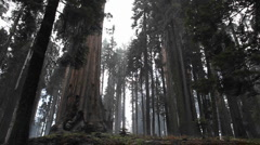 A redwood forest. Stock Footage