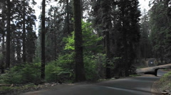 Driving through a carved out log in a redwood forest - POV Stock Footage