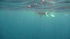 Free diver swim P2 Stock Footage