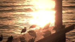 Shiny Gulls Stock Footage