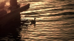 Sea Gull Stock Footage