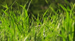 Blades of grass waving in a breeze. Stock Footage