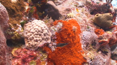 Tropical tiny fish and sea life Stock Footage