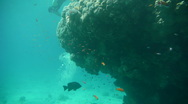 Stock Video Footage of Free Diver P9