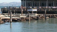 Pier 39 San Francisco - stock footage
