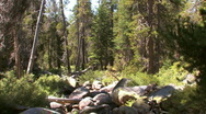 Small Creek in Yosemite National Park Stock Footage