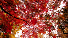 Falling Leaves on a Wonderful Autumn Day POV Stock Footage