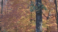 Stock Video Footage of Fall Leaves Autumn