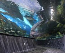 Walk-Through Aquarium Stock Footage