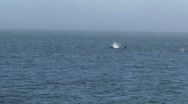 Orcas, Vancouver Island, Canada Stock Footage