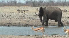 Bull Elephant splashing in waterhole Stock Footage