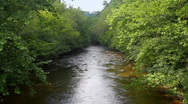 Forest Stream 5 Stock Footage