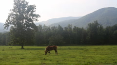 Horse Grazing in Valley Stock Footage