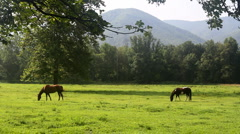 Horses Grazing in Valley Stock Footage