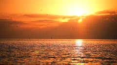 Beautiful Sunset with Sea Birds Flying - stock footage