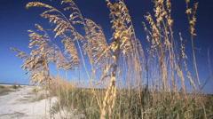 Wild Coastal Grasses Stock Footage