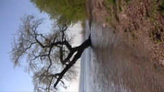 Old lonely common willow (Salix alba) in the spring river flood against a blue s Stock Footage
