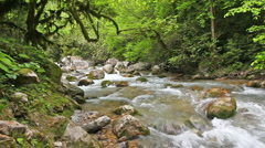 mountain river in forest - stock footage