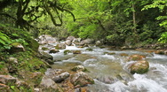 Mountain river in forest Stock Footage