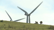 Wind turbines and sheep on a hill Stock Footage