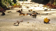 Stock Video Footage of Leaves on pavement 0394