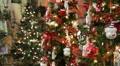 Christmas Trees HD Footage
