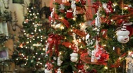 Stock Video Footage of Christmas Trees