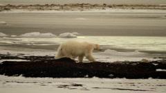 Tundra 101106 33 Stock Footage