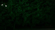 Shadows in night park Stock Footage