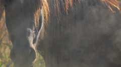 Mystery horses 03 Stock Footage