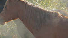 Mystery horses 04 Stock Footage