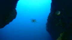 Feather star swimming - stock footage