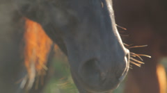 Mystery horses 06 Stock Footage