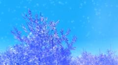 Christmas Trees Snow Loop MMsmall - stock footage