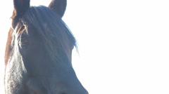 Mystery horses 08 Stock Footage