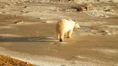 Tundra 101106 24 Stock Footage