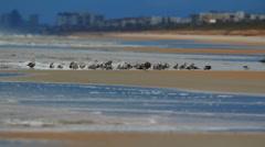 Seagulls on a sandbar Stock Footage