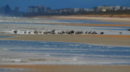 Stock Video Footage of Seagulls on a sandbar