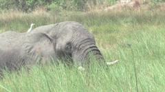 Elephants Okavango Delta, Botswana Stock Footage