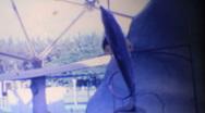 Seaquarium Dolphins perform circa 1963 Stock Footage