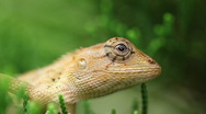 Stock Video Footage of Lizard