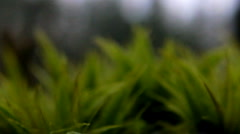Green moss Stock Footage