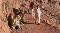 Camels. Mount Sinai. Egypt Stock Footage