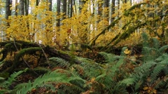 Beautiful forest in oregon Stock Footage