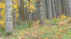 Man walking in the forest Stock Footage