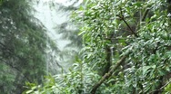 Rain in the Woods Stock Footage
