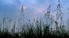 Sad grass Stock Footage